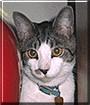 Costa the Cat