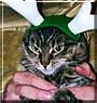 Vita the Cat