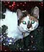 Sophie the Cat