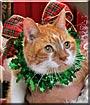 Cinnamon the Domestic Cat