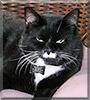 Webster the Tuxedo