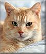 Maki the Cat