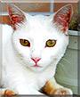 Branca the Cat