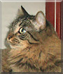 Masha the Maine coon mix