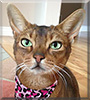 Chapel the Abyssinian