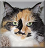 Kandi the Calico Longhair