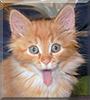 Garfield the Orange Tabby Cat