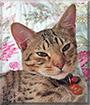 Riley the Ocicat
