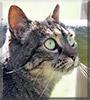 Mouko the Cat