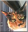 Gatita the Calico Cat