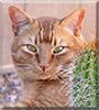 Tumbleweed the Cat