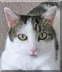 Tabby the Tabby Cat