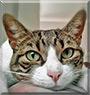 Ms. Paranoia the Cat