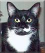 Felix the Tuxedo Cat