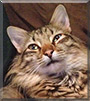 Moe the Bengal, Maine Coon