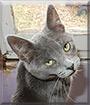 Biscuit the Cat