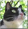 Peppy the Tuxedo cat