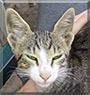 Cica the Cat