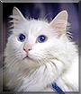 Mr. Charlotte the Cat
