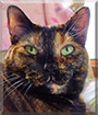 Willow the Tortoiseshell Calico