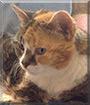 Maggie the Calico Cat