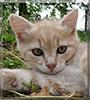 Esmé the Kitten