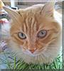 Murka the Cat
