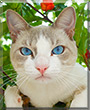 Galego the Cat