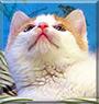 Thea Theodore VanCatt the Cat