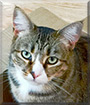 Tigress the Tabby mix