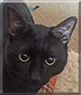 Mr Deakin the Cat