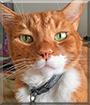 Lenny the Tabby Cat