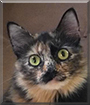 Kayla the Tortoiseshell Cat