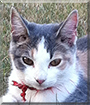 Belley the Calico Cat