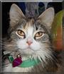 Sparticus the Medium hair Cat