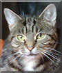 Tiny Cat the Tabby Moggy