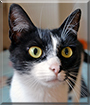 Panterica the Cat