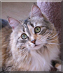 Bijou the Maine Coon mix