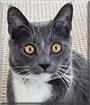 Leki the Tuxedo Cat