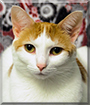 Shylah the Cat