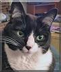 Mollie the Tuxedo Cat