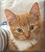 Theo the Domestic Housecat