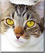 Tammy the Tabby Cat