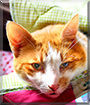 Jacky the Ginger Tabby