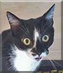 Luna the Tuxedo Cat