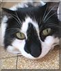 Crapouille the Cat