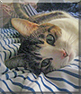 Misa the Tabby Cat