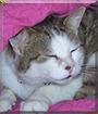 Murphy the Tabby Cat
