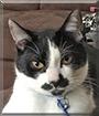 Albert the Cat