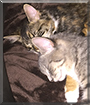 Keke and Kallie the Gray Tabby and Calico